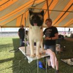 St. Clair Kennel Club Dog Show