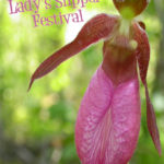 Join In on the Lady Slipper Festival