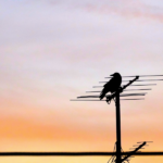 Antenna TV Users Need to Rescan to Access Local TV Stations